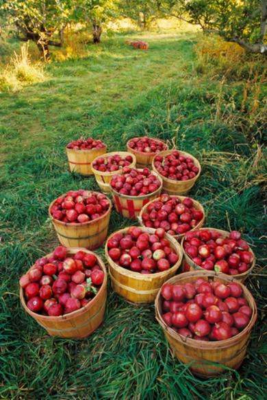 Local food. Rural economy. Loudoun has some of the most fertile agricultural land in our nation. Photo credit: Crooked Run Orchard.