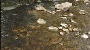 "The pristine waters of a healthy Virginia stream – entirely ""unimpaired."""