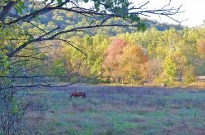 Open field (photo by John P. Flannery)