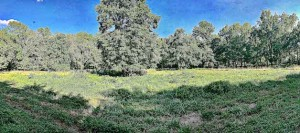 "A panoramic view of ""the Meadow."""